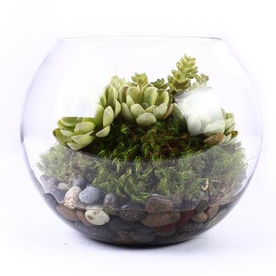 - Bubble Glass Succulent Planter